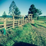 timber cattle yards (2)